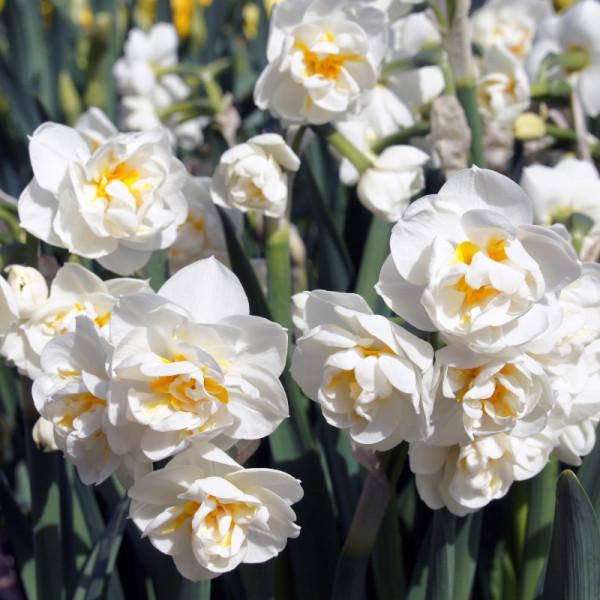 Daffodil Bridal Crown