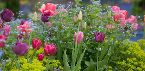 Combinatie-bloembollen-vaste-planten-thumb