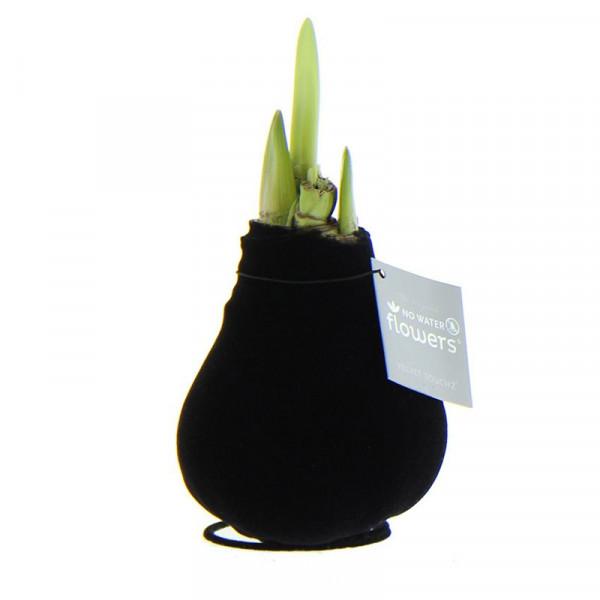 Wax Amaryllis Velvet Touchz Black