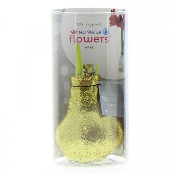 Wax Amaryllis Glitterz Gold in a Tube