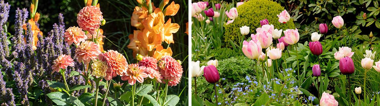 Combinatie-bloembollen-vaste-planten-sub3WALjrvM8Kw9pM