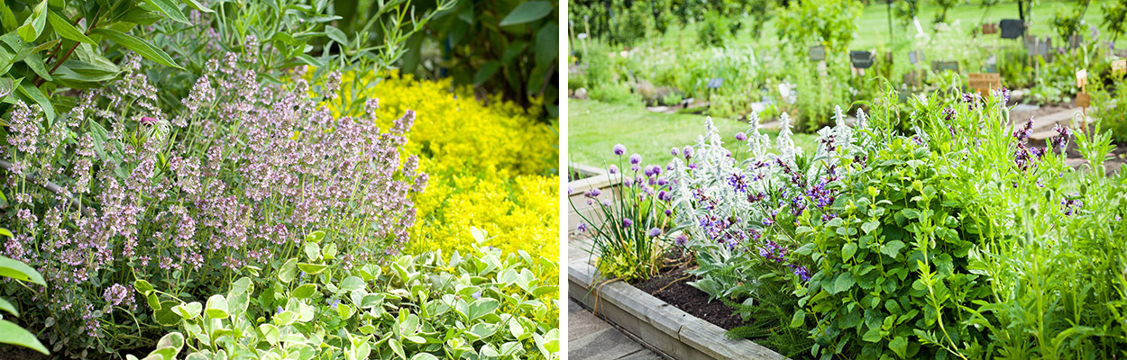 Combinatie-bloembollen-vaste-planten-sub2