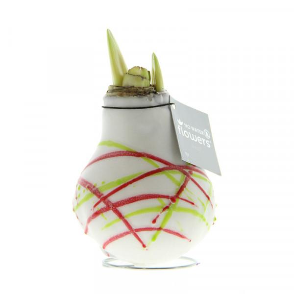 Wax Amaryllis Picasso White