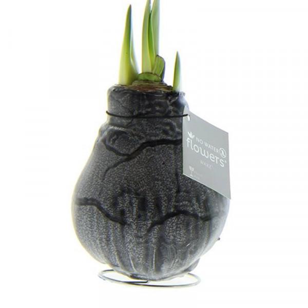 Wax Amaryllis Marble Black